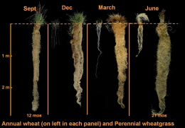 Four seasons photo of 